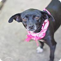 Adopt A Pet :: Abbie - Kingwood, TX
