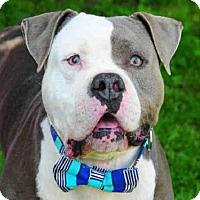 Adopt A Pet :: WINSTON - Louisville, KY
