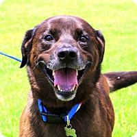 Adopt A Pet :: Smokie - Glastonbury, CT