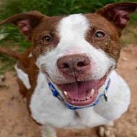 Labrador Retriever Mix Dog for adoption in Atlanta, Georgia - MURPHY