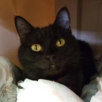 Adopt A Pet :: Mariah - Erie, PA