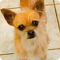 """Adopt A Pet :: """"Barry"""" - Seattle, WA"""