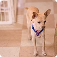 Adopt A Pet :: Dory - Sacramento, CA