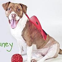Adopt A Pet :: *TUNEY - Sacramento, CA