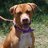 Adopt A Pet :: Ramsey - Pluckemin, NJ