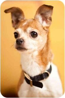 Chihuahua Dog for adoption in Portland, Oregon - Chi