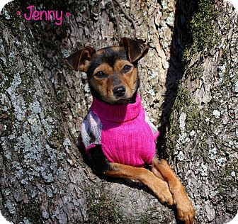 Miniature Pinscher/Manchester Terrier Mix Dog for adoption in Flowery Branch, Georgia - Jenny