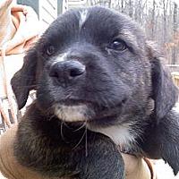 Adopt A Pet :: Knox - Harrisburgh, PA