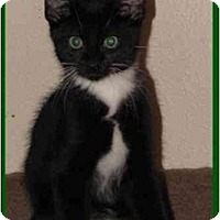 Adopt A Pet :: Webster - Orlando, FL