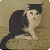 Adopt A Pet :: Freida - Riverside, CA
