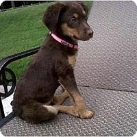 Adopt A Pet :: Rosie (pending adoption) - Adamsville, TN