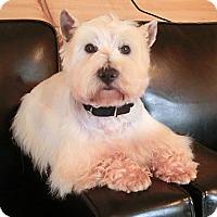 Adopt A Pet :: FARLEY - GARRETT, IN