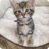 Adopt A Pet :: Henry - Xenia, OH