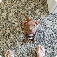Adopt A Pet :: Ralph - Wyoming, MI