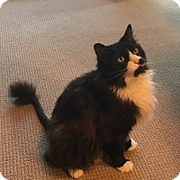 Adopt A Pet :: MImi - Laguna Woods, CA