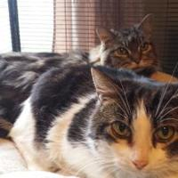 Adopt A Pet :: Sasha - Verona, WI