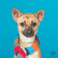 Adopt A Pet :: Hewey - Northbrook, IL