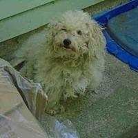 Adopt A Pet :: A623158 - Louisville, KY