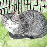 Adopt A Pet :: George - Colmar, PA