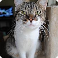 Adopt A Pet :: Bobby - Monroe, NC