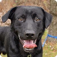 Adopt A Pet :: Remi - Cincinnati, OH