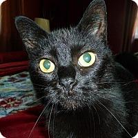 Adopt A Pet :: Noel - Xenia, OH