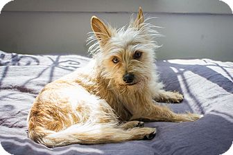 Terrier (Unknown Type, Small) Mix Dog for adoption in Los Angeles, California - Floyd