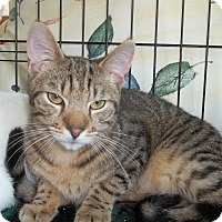Adopt A Pet :: Henry Ford - Acme, PA