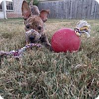 Adopt A Pet :: Asher - Nashville, TN