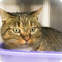 Adopt A Pet :: Alex - Webster, MA