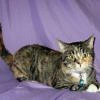 Adopt A Pet :: Shanna - Powell, OH