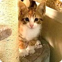 Adopt A Pet :: Dori - Sugar Land, TX