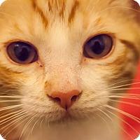 Adopt A Pet :: Arya - Eureka, CA