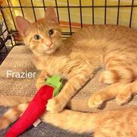 Adopt A Pet :: Frazier - Ellicott City, MD