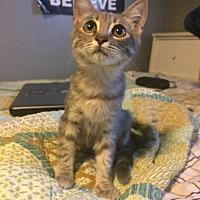 Adopt A Pet :: Crescent - Hammond, LA