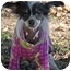 Photo 3 - Chinese Crested Dog for adoption in Brecksville, Ohio - Chance/ IN VIRGINIA