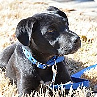 Adopt A Pet :: Rowdy - Cumming, GA