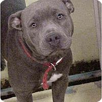 Adopt A Pet :: Teresa - Emory, TX