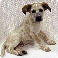Adopt A Pet :: Edie - Phoenix, AZ