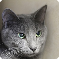 Adopt A Pet :: JoJo Guadalupe - Chicago, IL