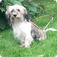 Adopt A Pet :: Polly - Norwalk, CT