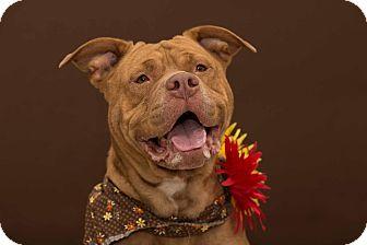 Terrier (Unknown Type, Medium) Mix Dog for adoption in Flint, Michigan - Greta - Adopted