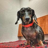 Adopt A Pet :: Etsy - Weston, FL