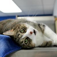 Adopt A Pet :: Mae - St. Petersburg, FL