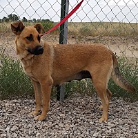 Adopt A Pet :: June - Sterling, CO