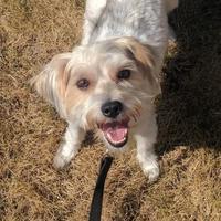 Adopt A Pet :: Clara - Calgary, AB