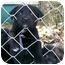 Photo 2 - Labrador Retriever Mix Puppy for adoption in Hammonton, New Jersey - Susie