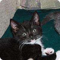 Adopt A Pet :: Licorice (LE) - Little Falls, NJ