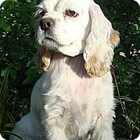 Adopt A Pet :: Hannah - Sugarland, TX