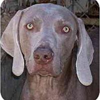 Adopt A Pet :: Leo - Eustis, FL